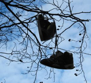 Trainers in a tree